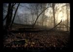 Shenandoah Cloud Forest