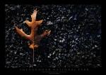 Dying Leaf