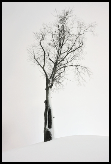 Tree of Winter