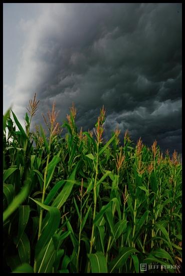 Corn Storm